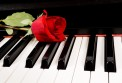 Boxed Note Cards: Rose Piano