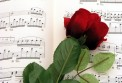 Boxed Note Cards: Rose On Sheet Music
